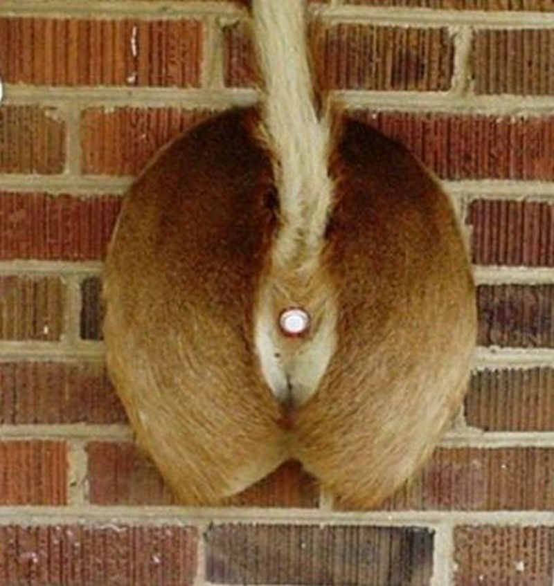 Deer Butt Doorbell