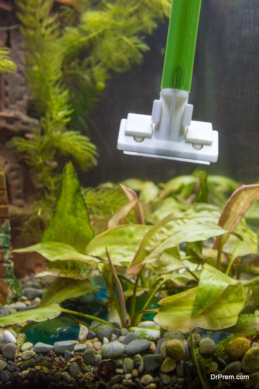 repair-and-clean-your-aquarium