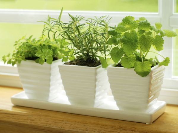 How to grow a perfect herb garden