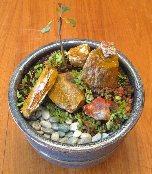 Add a touch of Zen to your home with an indoor rock garden