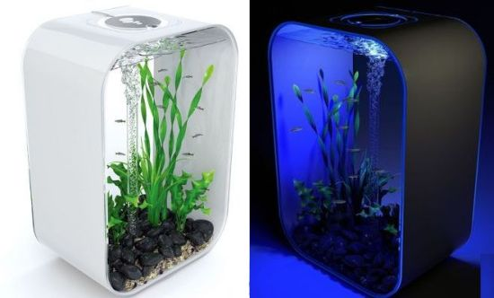 24 hour light cycle aquarium