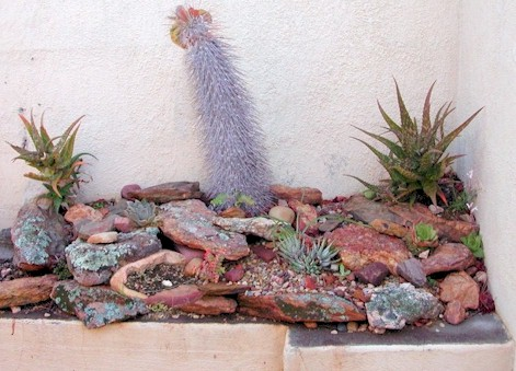 Add a touch of zen to your home with an indoor rock garden for Easy rock garden designs