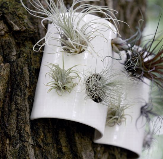airplant tiles 3