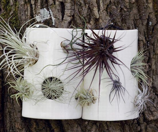 airplant tiles