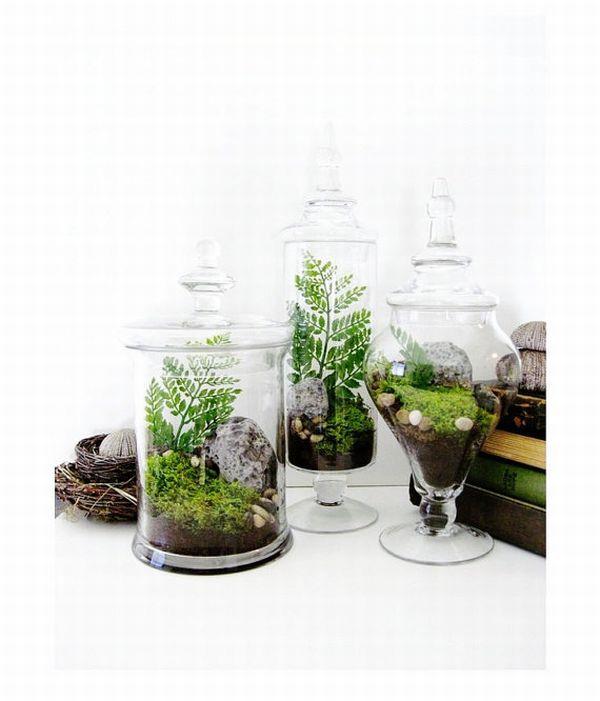 Apothecary Jar Terrarium Set