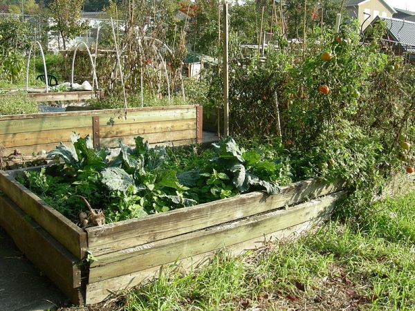 Benefits you can reap with raised garden beds