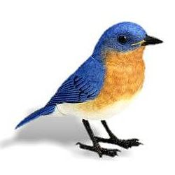 bluebird electronic bird