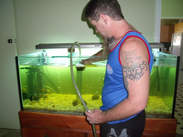 aquarium fish cleaners aquarium cleaner fish points to