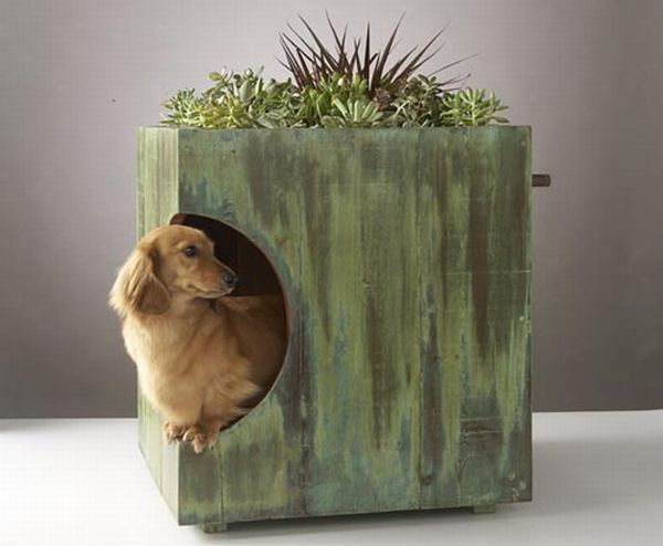 DOG HOUSE with A GREEN ROOF