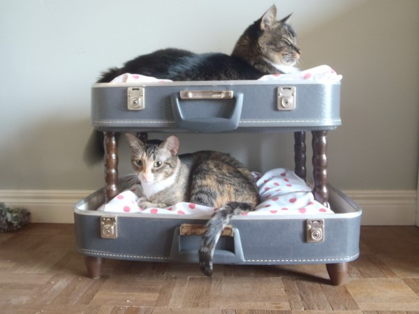 10 Cute Little Beds In A Suitcase For Pets Hometone