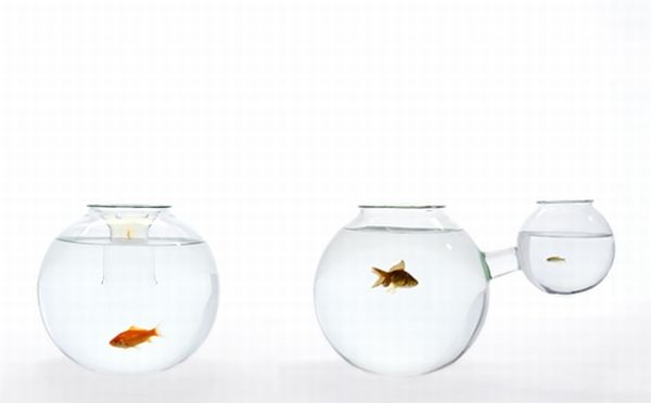 Fish Bowls by Roger Arquer