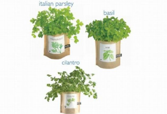 Garden-in-a-Bag Herb Collection: Enjoy greenery all year-round ...