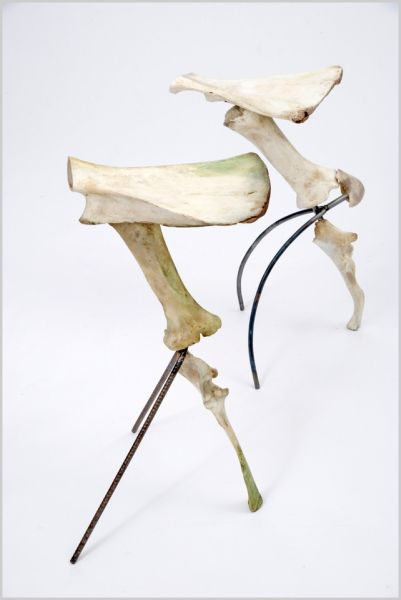 Get back to prehistoric era: Stools made from discarded cow bones