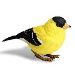 goldfinch electronic bird