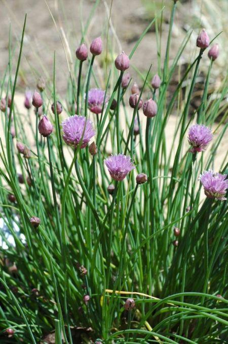 Herbal plant 2