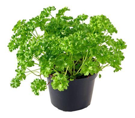 Herbal plant 6