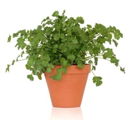 Herbal plant 7