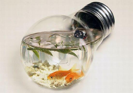 image_title_wzbgt Memilih Mini Aquarium untuk Ikan Hias Kecil  wallpaper