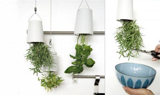 indoor herb garden 1