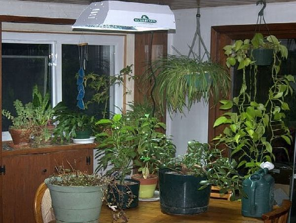 Everything you need to know about growing an indoor garden for Indoor gardening apartment
