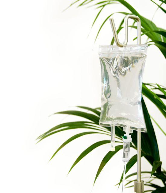 iv plant2 jUQsX 5965