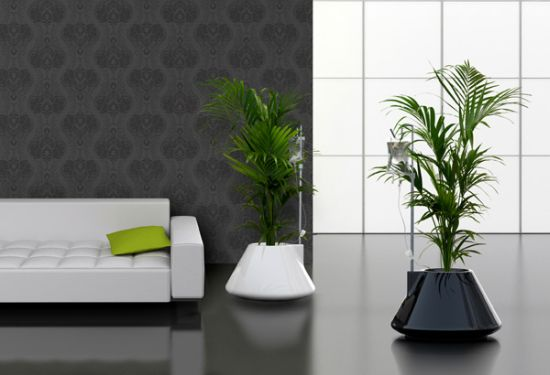iv plant uOXtd 5965
