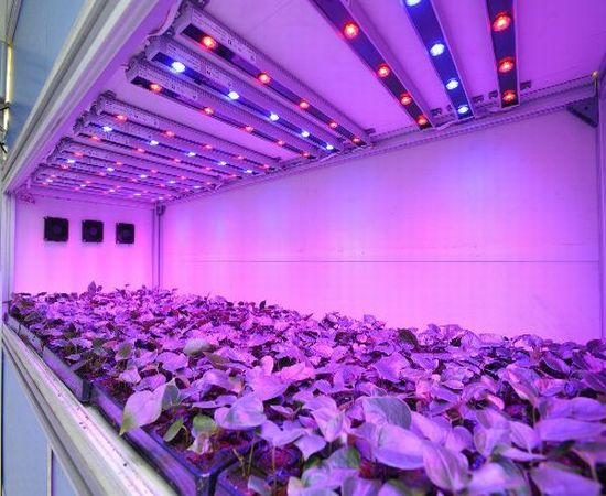 LED LIGHTING IN HORTICULTURE