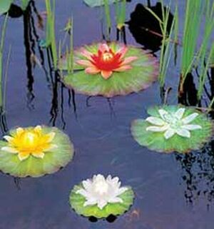 lily pad lights