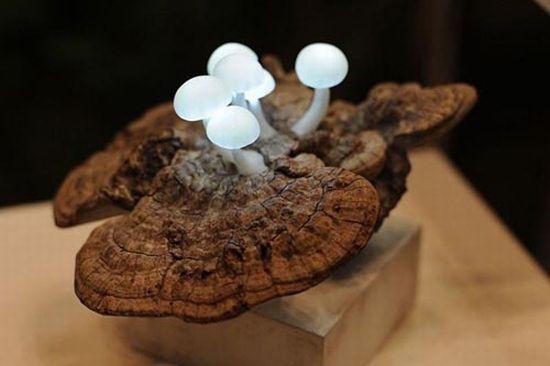 mushroom led1