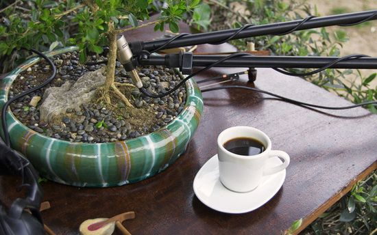 music from bonsai 1
