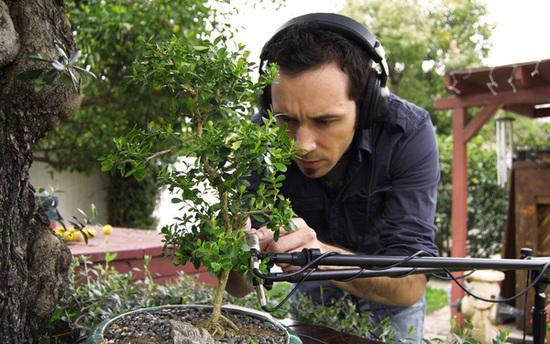 music from bonsai