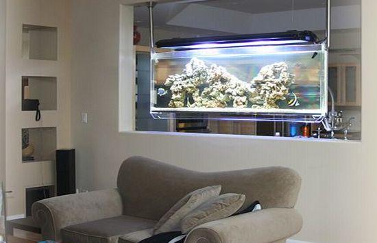 Spacearium bequeaths a natural ecosystem hometone for Spacearium aquariums