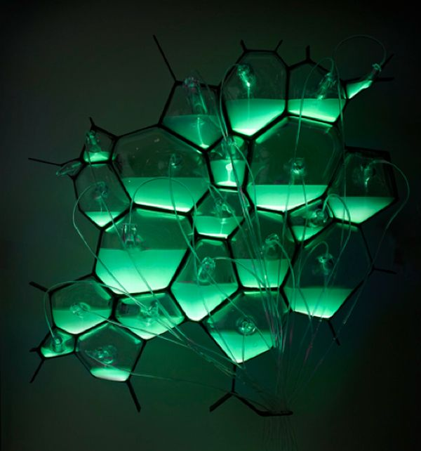 The bio-lights