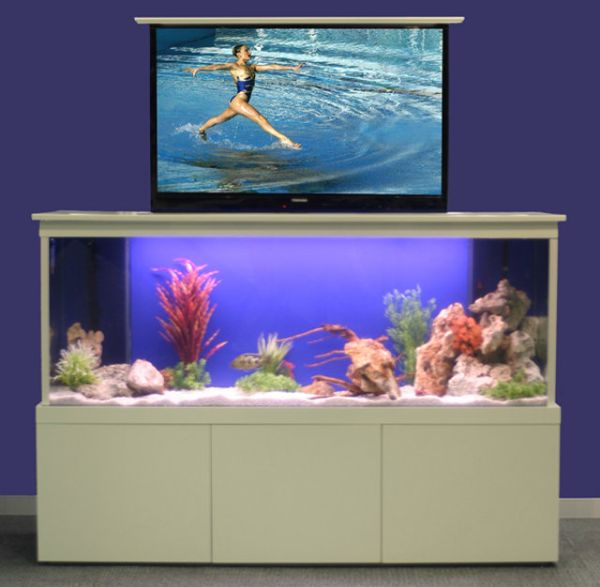 Tv tank hides your flatscreen behind a big aquarium for Aquarium 20 litres poisson rouge