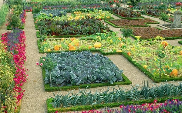 How to grow a vegetable garden hometone home for Veggie patch layout