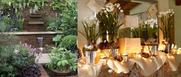 Vines and shrubs for Fall