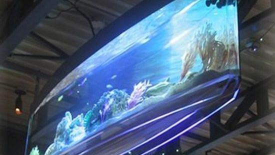 Spacearium the wall hung aquarium hometone for Spacearium aquariums