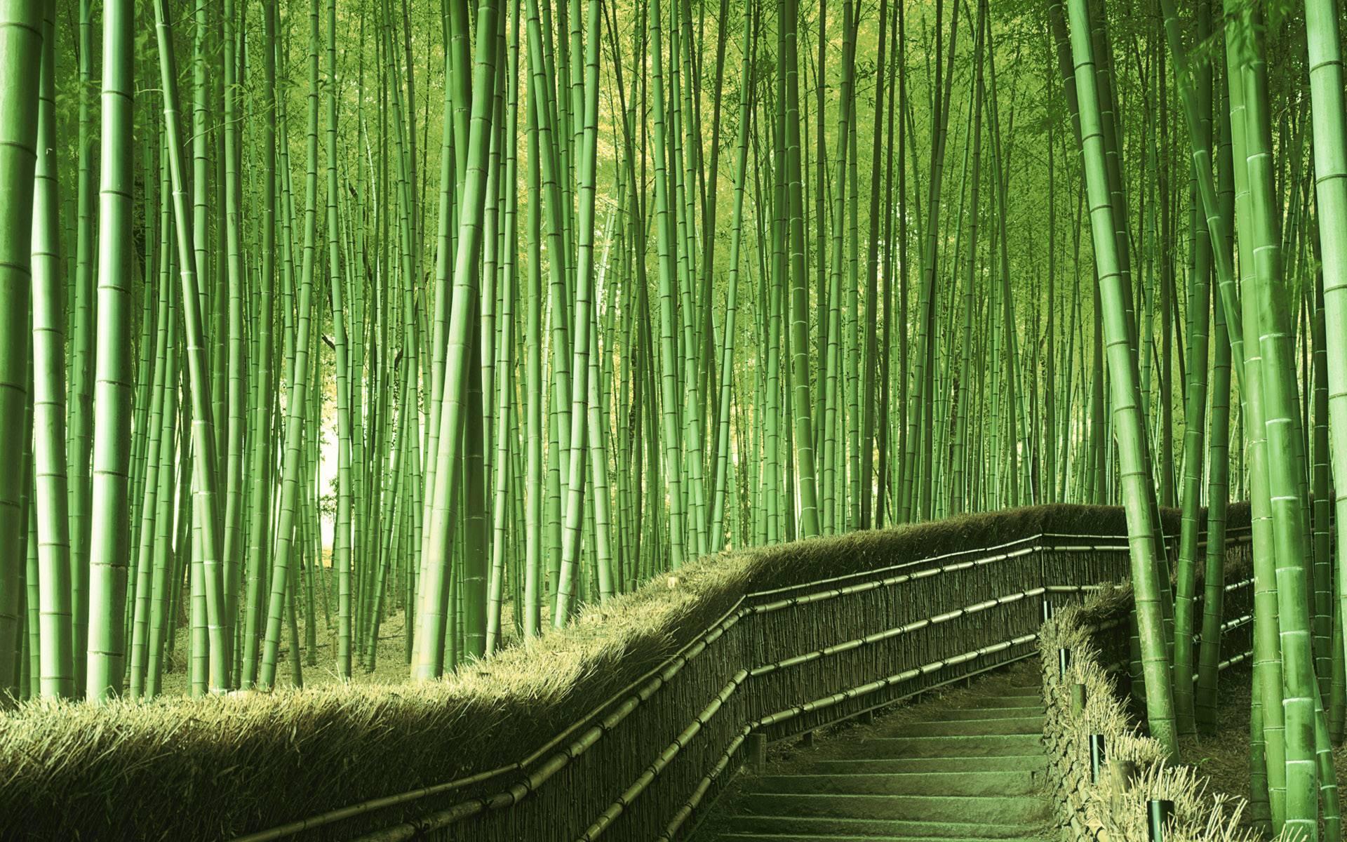 Bamboo-Kyoto-6