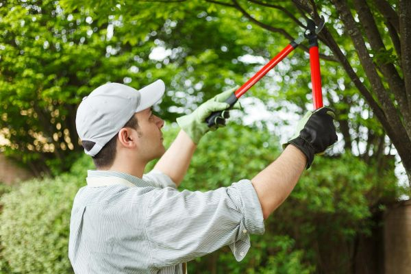 tips-on-gardening-services-in-london-cleaning-and-maintenance