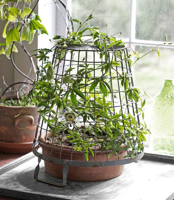 unique-indoor-plants