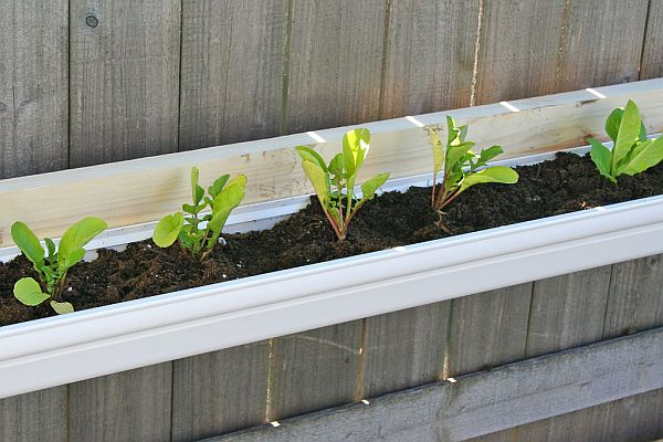 Tiny gutter kitchen garden
