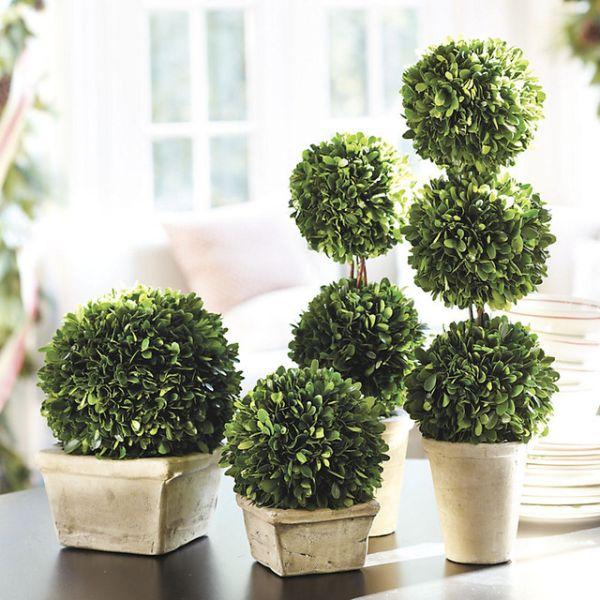Boxwood Topiary_2