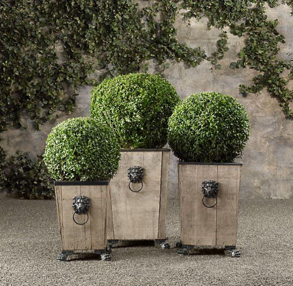 Boxwood Topiary_3