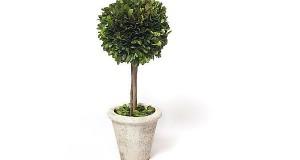 Boxwood Topiary_8
