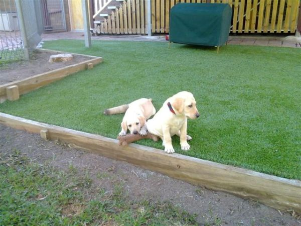 maintaining your artificial grass lawn 6