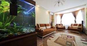 aquarium at home