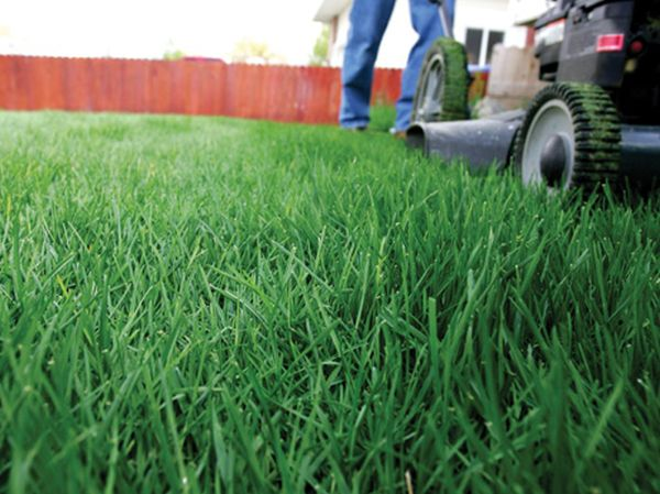 lawn in home (1)