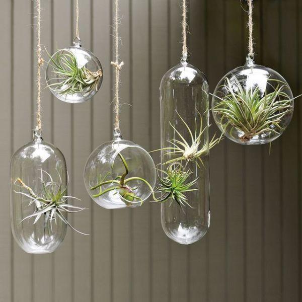 Glass Bowl Hanging Planter