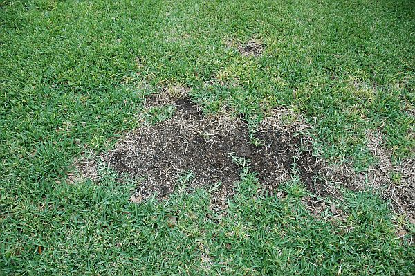 treatment of diseases of lawn