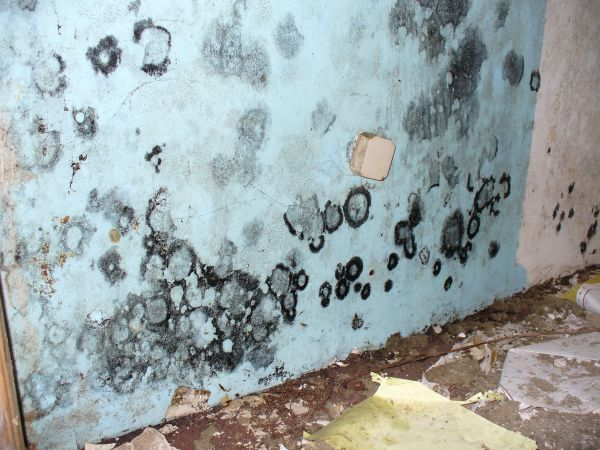 mold  interior walls (2)